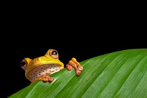 Amazonas, Brasil, Fred. Olsen Travel