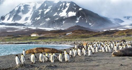 Falkland Øyene, Fred. Olsen Travel