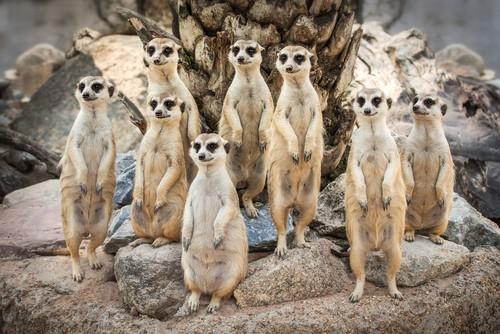 Madagascar, Fred. Olsen Travel