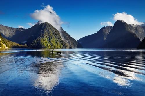 New Zealand, Fred. Olsen Travel