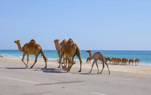 Salalah Oman