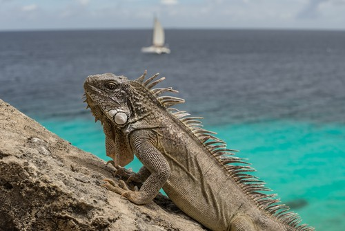 Bonaire Fred. Olsen Travel