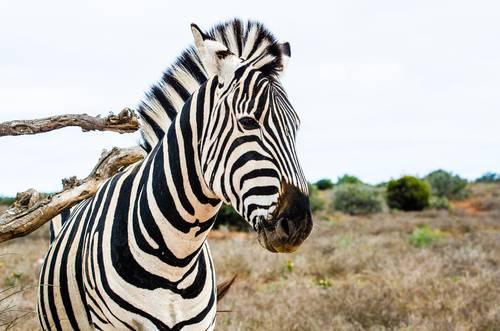 Sør Afrika, Fred. Olsen Travel