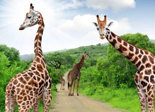 Sør Afrika Fred. Olsen Travel