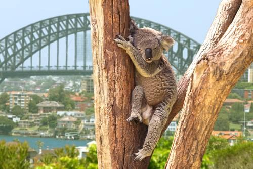 Cruise langs Australia østkyst