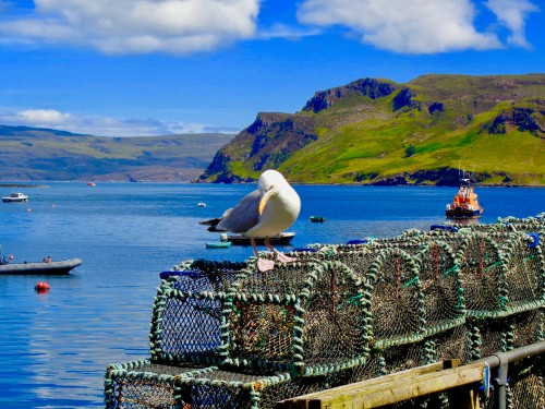 Seagull perched on a fish trap on the Isle of Skye, Scotland, United Kingdom