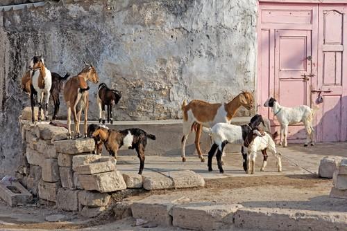 Porbandar, Gujarat, India