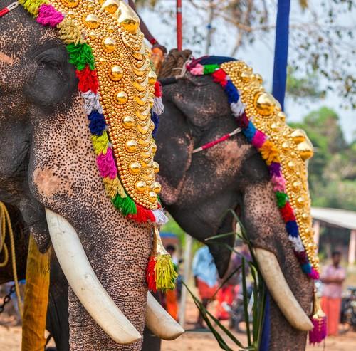 Decorated elephants, Kerala, India