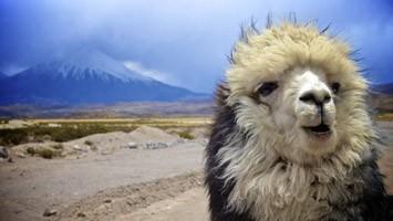 Sør-Amerika cruise med fra England til Peru