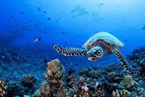 Franske Polynesia